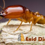 Diagnostic termites La Réunion - Exid Diagnostic